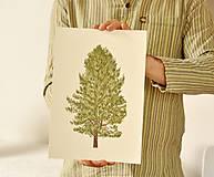 Grafika - Print - ,Pinus'  - 11638679_
