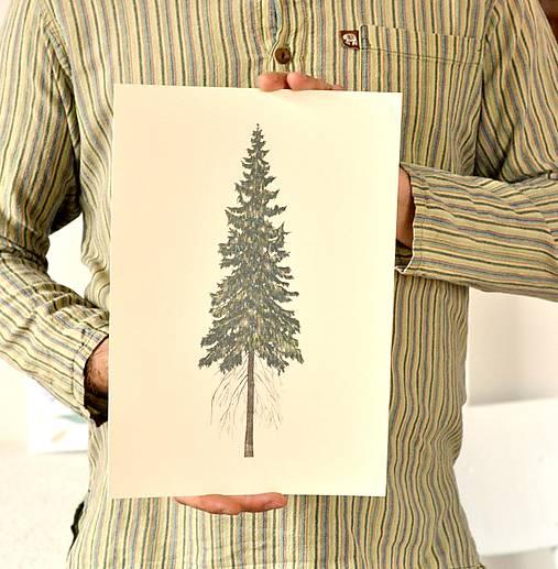 Print - ,Picea'