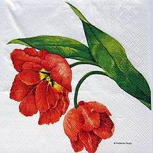 Papier - Servítka  K 54 - 11643078_