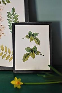 Obrázky - Obraz Botanical no.4 - 11644079_