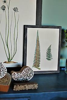 Obrázky - Obraz Botanical no.5 (papradie) - 11644100_