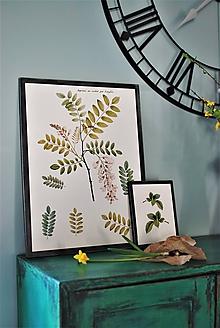 Obrázky - Obraz Botanical no.9 - 11644140_