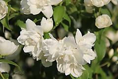 Grafika - Vôňa kvetov ... - 11658457_