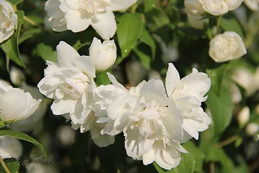 Fotografia - Vôňa kvetov ...