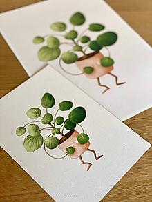 Grafika - Zahanbená pilea - Print | Botanická ilustrácia - 11669319_