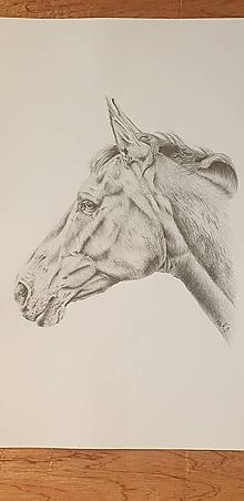 Kresby - Kresba :Kôň - 11668702_