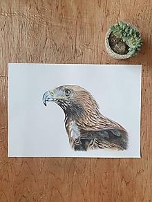 Kresby - Kresba :Orol skalný - 11690659_