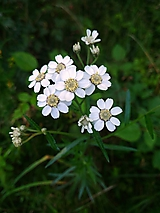Fotografie - V tráve... - 11689884_