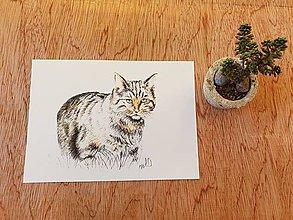 Papiernictvo - Pohľadnica:Mačka divá - 11698749_