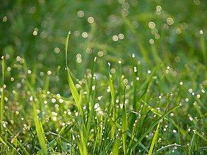Fotografie - Kvapky rannej rosy v slnečných lúčoch, jarná Veľkonočná nástenná dekorácia do domu - 11702929_