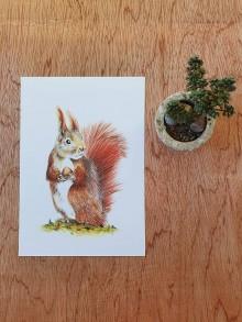 Papiernictvo - Pohľadnica: veverička - 11700108_