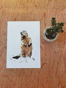 Papiernictvo - Pohľadnica :svišť - 11700116_