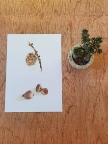 Papiernictvo - Pohľadnica: prírodniny šiška smrekovec - 11704728_