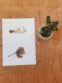 Papiernictvo - Pohľadnica : semienko lipa - 11704739_