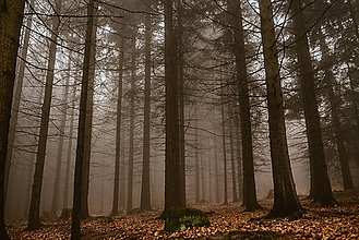 Fotografie - Lesy - 11719335_