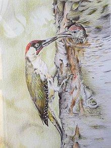 Kresby - Print - Kresba: Pár ďatľov - 11724483_