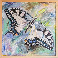 Obrazy - Obraz motýľ - 11744949_