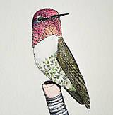Kresby - Kolibrík na ceruzke - originál (vel. A5) - 11754397_