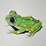 Kresby - Žabka s bodkami - ručně kolorovaná reprodukce  (vel. A5) - 11754442_