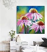 Obrazy - Echinacea - 11765494_