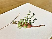 Grafika - Starček bez dozoru - Print | Botanická ilustrácia - 11766820_