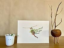 Grafika - Starček bez dozoru - Print | Botanická ilustrácia - 11766821_