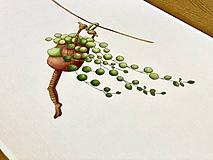 Grafika - Starček bez dozoru - Print | Botanická ilustrácia - 11766822_