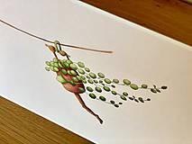 Grafika - Starček bez dozoru - Print | Botanická ilustrácia - 11766824_