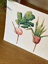 Grafika - Črepníkový kankán - Print | Botanická ilustrácia - 11766880_