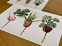 Grafika - Črepníkový kankán - Print | Botanická ilustrácia - 11766881_