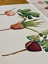 Grafika - Črepníkový kankán - Print | Botanická ilustrácia - 11766882_
