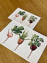Grafika - Črepníkový kankán - Print | Botanická ilustrácia - 11766883_