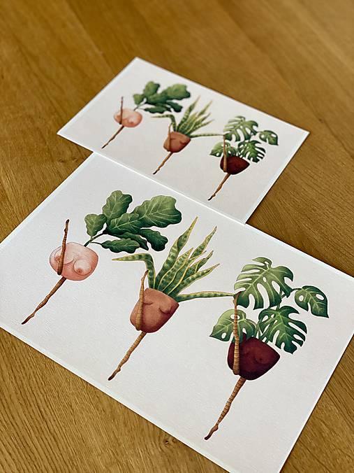 Črepníkový kankán - Print | Botanická ilustrácia