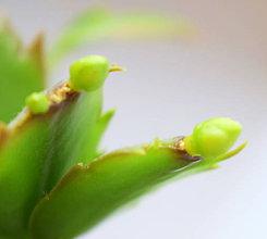 Fotografie - Kaktus - 11770202_