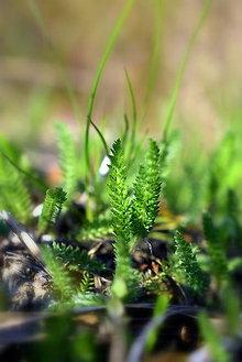Fotografie - Na lúčke zelenej XII. - 11801293_
