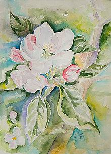 Obrazy - Jabloňový kvet - 11805935_