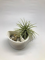 Dekorácie - 3D kvetináč s tillandsiou (Biela) - 11806719_