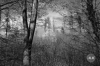 Nezaradené - Digitálna fotografia - Lesná scéna - 11834713_