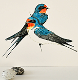 Kresby - Lastovičky vo farbách (vel. A4) - 11843059_