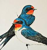 Kresby - Lastovičky vo farbách (vel. A4) - 11843063_