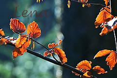 Fotografie - Pestrý podzimní den - Autorská fotografie - 11843869_