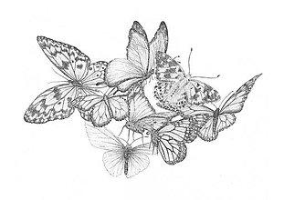 Kresby - Motýle - originál - 11846334_