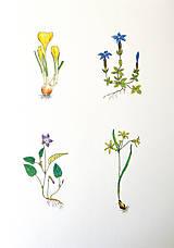 Kresby - Jarné kvetinky 1 - 11850635_