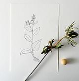 Kresby - Plicník - černobílý - 11850978_