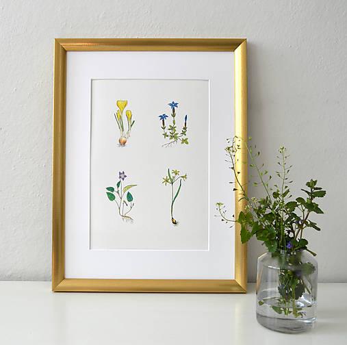 Jarné kvetinky 1