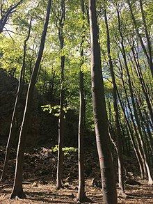Fotografie - Prebúdzanie stromov - 11852032_