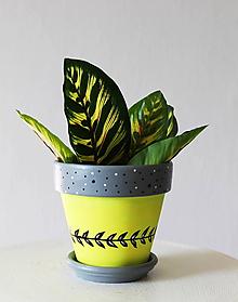 Nádoby - Terakotový kvetináč - Citrón - 11861051_