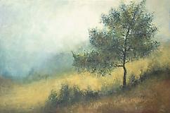 Obrazy - Tichá borovica - 11869017_