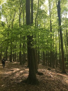 Fotografie - Pri strome stromček - 11870798_