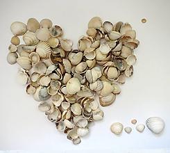 Suroviny - Morská mušľa srdcovka mix 30ks - 11887447_